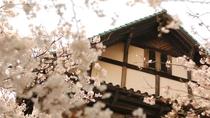 *お花見シーズンには当館周辺が見事な桜で満開になります。