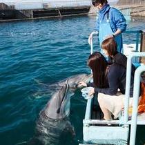 イルカさんと触れ合えます