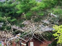 自然のBGMでリラックス。カッコウやウグイスなどの鳴き声が聞こえます。(写真はヤマガラです)
