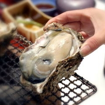 鳥取県産天然岩牡蠣「夏輝」