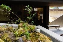 玄関口の苔