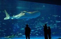 鹿児島水族館「いおワールド」