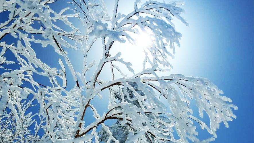 *【冬の志賀高原】毎年木々に雪が降ると「雪の華」が満開になります!
