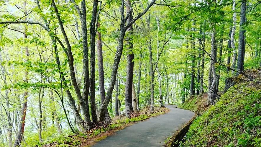 *【森林ウォーク】グリーンシーズンは、周辺の森でウォーキングを楽しみませんか?