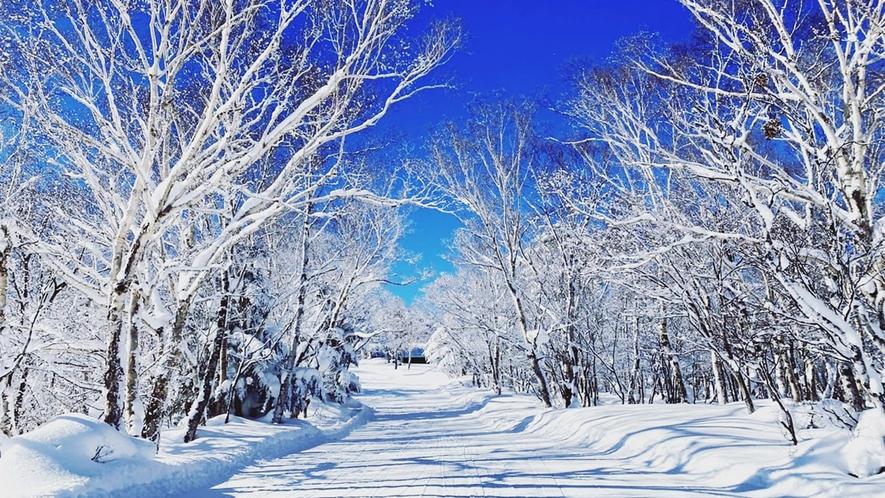 *【冬景色】青空と雪景色のコントラストが美しく、写真映えします。