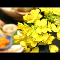 菜の花コース