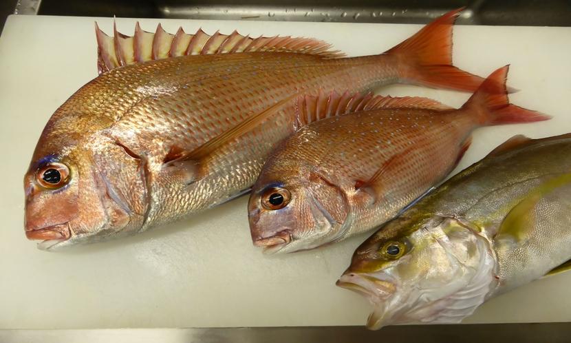 地魚(鯛・イナダ)
