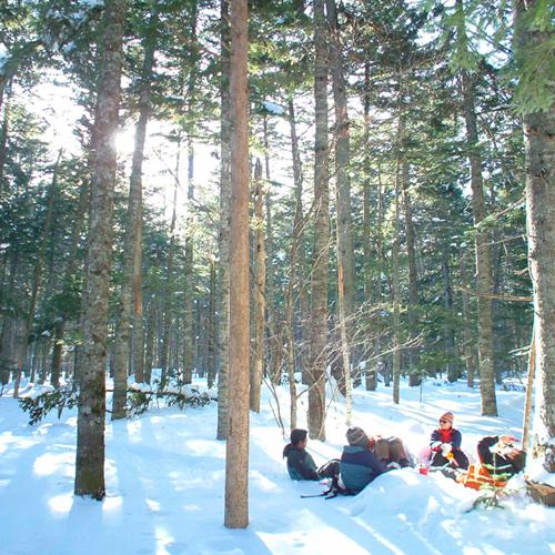 *冬の森を散策