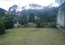 ワンちゃんも、のびのび遊べる庭があります