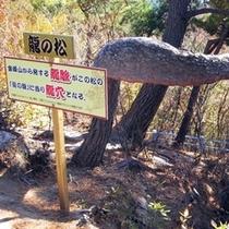 【龍の松】昇仙峡