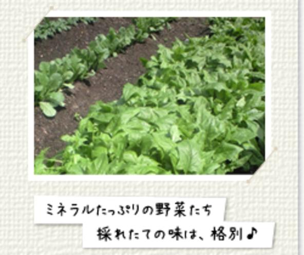 ミネラルたっぷり自家栽培のお野菜