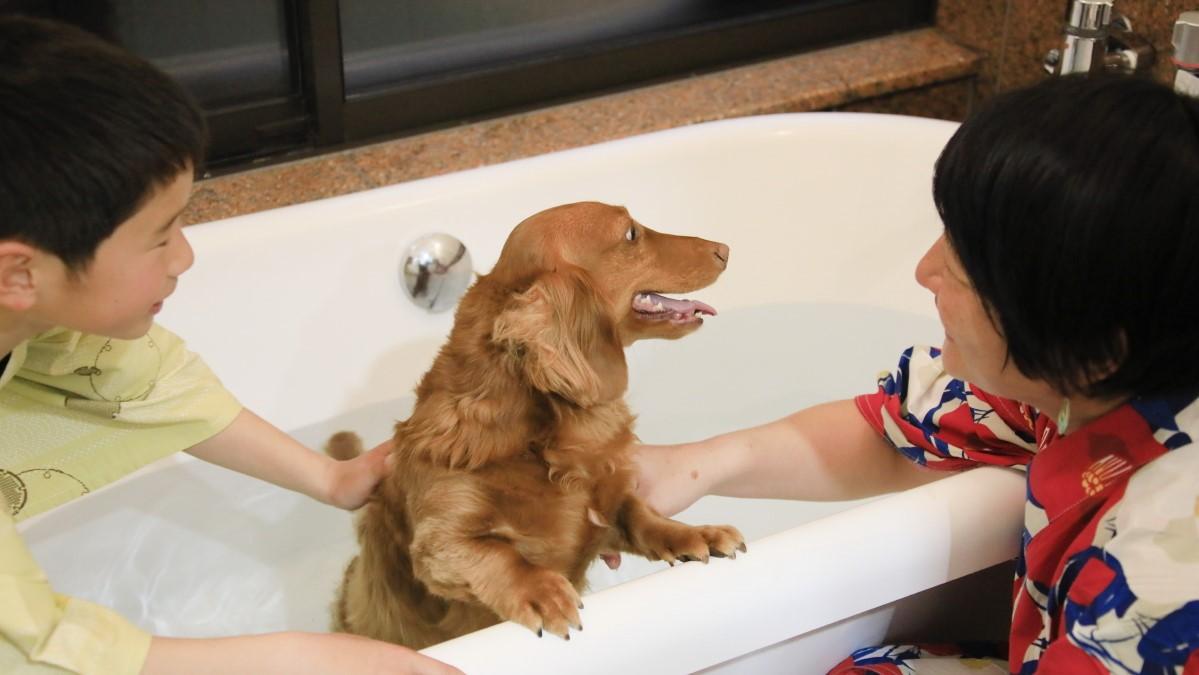 ■内風呂 内風呂も温泉なので急な雨でも安心!