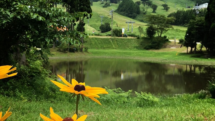 *ハチ高原の風景