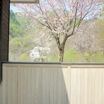 *【桜】春の風物詩といえばこの花!美しく咲く姿をご覧下さい。
