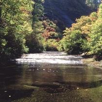 【周辺観光】天国の散歩道「赤水渓谷」秋のコントラストが美しい。