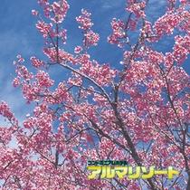 日本一早い桜祭り
