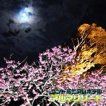 夜桜 今帰仁城跡