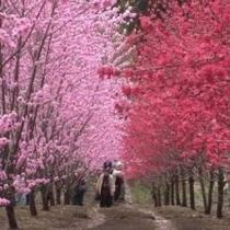 観光花木園