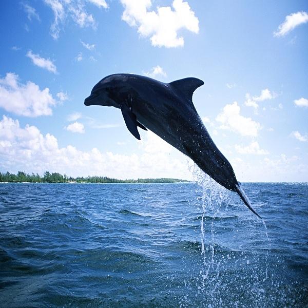 夏限定!『日間賀島ドルフィンビーチ』イルカと貴重な体験ができますよ!予約必須なのでご注意下さい。