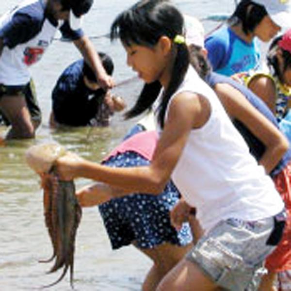 日間賀島でしか体験できない!タコのつかみ取りは、5月〜8月開催。毎年8月12日は、タコ祭り!!
