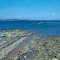 毎年GWあたりで一般の方にもアサリや大アサリの潮干狩りが楽しめます。開催日程は毎年変わります。