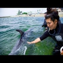 夏限定!イルカと遊べるふれ合い体験!『日間賀島ドルフィンビーチ』予約必須なのでご注意下さい。