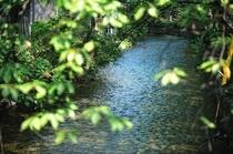 【周辺情報】高瀬川
