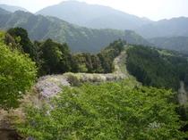 日本一の藤棚