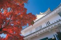 岐阜城の紅葉