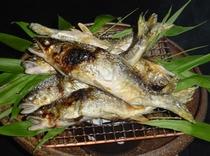 長良川天然鮎