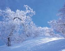 冬の大野の山