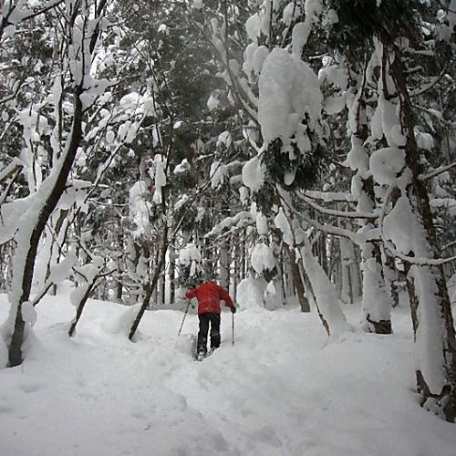 スノーシュートレッキング