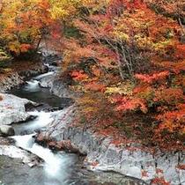 錦秋の中津川渓谷