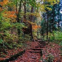 小野川不動滝探勝路・落ち葉の絨毯