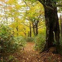 野鳥の森探勝路