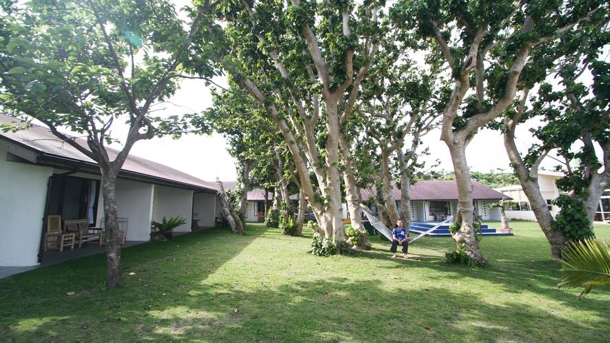 *【中庭】テリハボクの木にかけられたハンモック。波の音を聞きながら穏やかな時が過ごせます。
