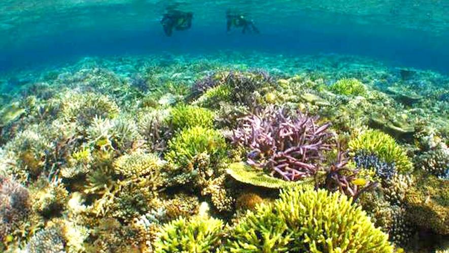 *【周辺】南国の海では、魚はもちろんサンゴもカラフル♪海の透明度もより鮮やかさを際立たせます。