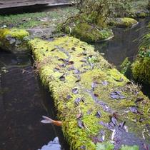 *中庭の池