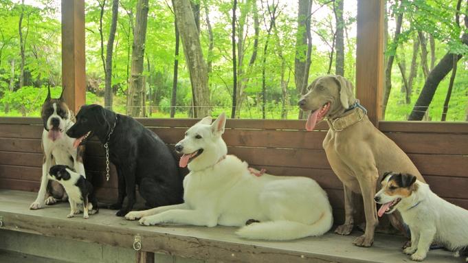 満10歳以上のシニア犬歓迎!プラン【現金特価】
