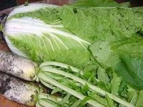 マイ農園にて・獲りたて野菜