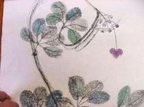 アケビの花の蔓です