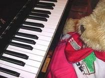 ペンションのピアノでライブ♪