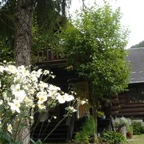 しゅうめい菊の咲く秋の庭