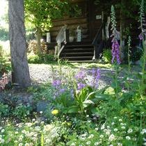 初夏の庭の様子