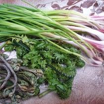 山菜採り。ノビル、コゴミ、ワラビが採れました。