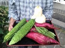 畑で作った自家製野菜