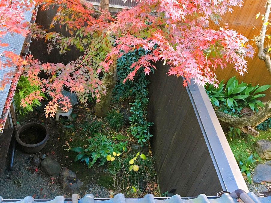 窓から大きな紅葉が見える和室