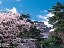桜_青葉城址