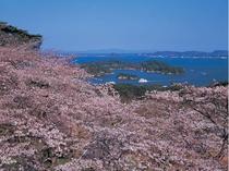 桜_松島湾