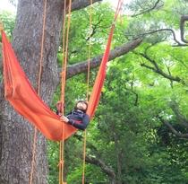 ー過ごし方ー 晴れた日にはツリーイング!樹の上から眺め、感じる自然の深さ